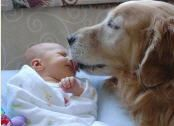 Dog and a Baby